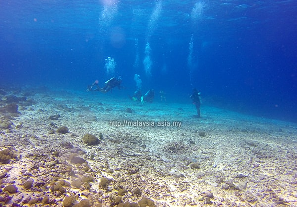 Alor Island diving visibility