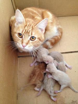 photo chats à la naissance