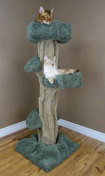 Dishfunctional Designs Cool Cat Houses For Cool Cats