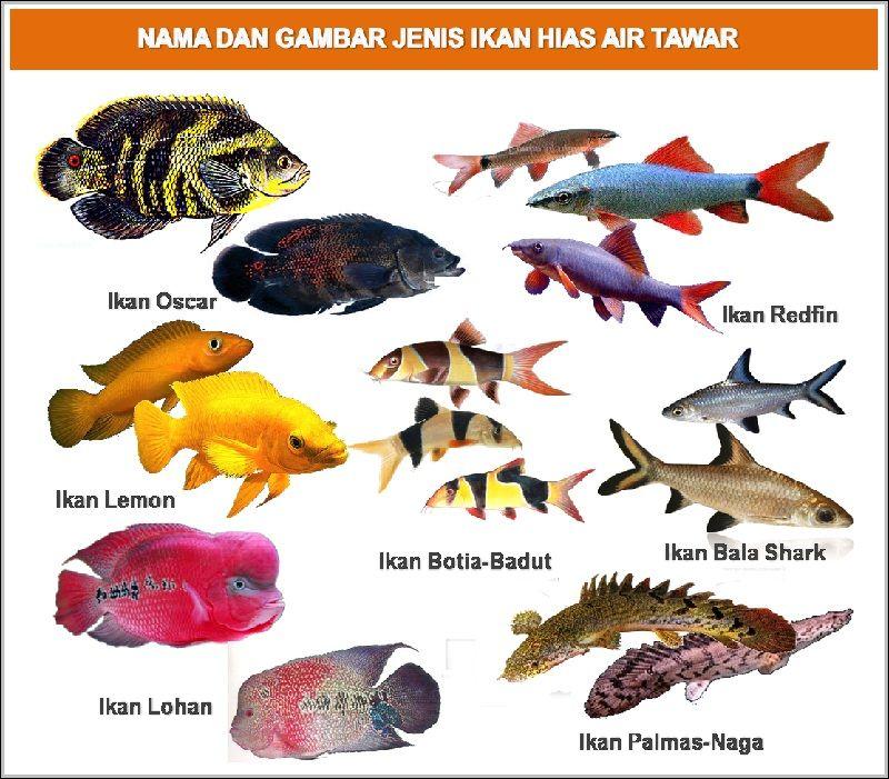 Nama Dan Jenis Ikan