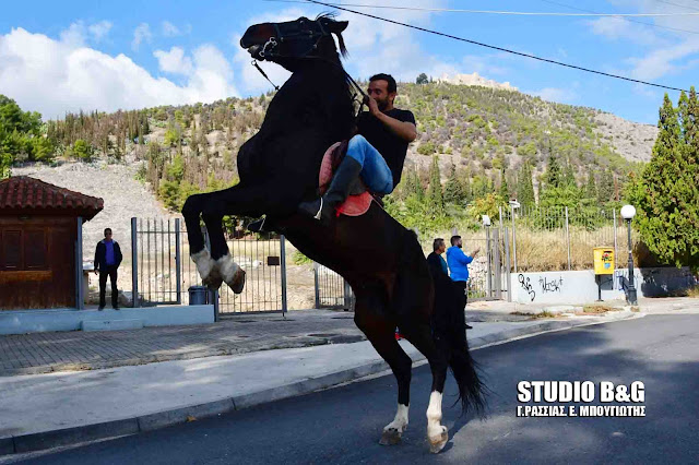 """Εντυπωσιακά άλογα στα """"Διομήδεια 2017"""" στο Άργος (βίντεο)"""