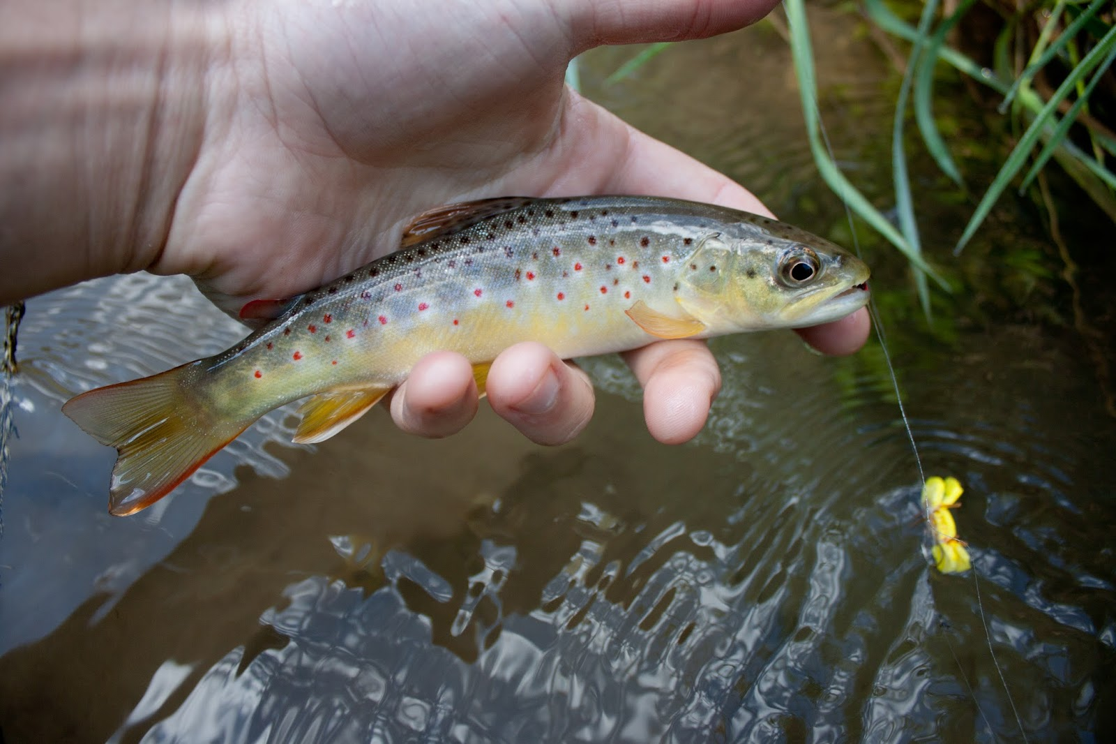 Trout stream day dreams a beautiful weekend in wisconsin for Wisconsin trout fishing