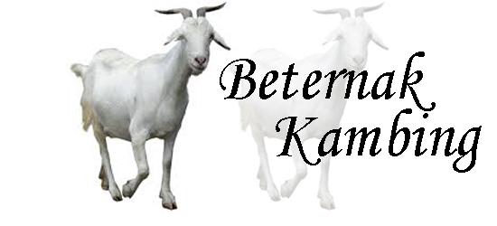 Cara beternak kambing yang benar, Cara memelihara kambing, Faktor yang mempengaruhi kesuksesan ternak kambing, Peternakan, Ternak Kambing, tips berternak kambing,
