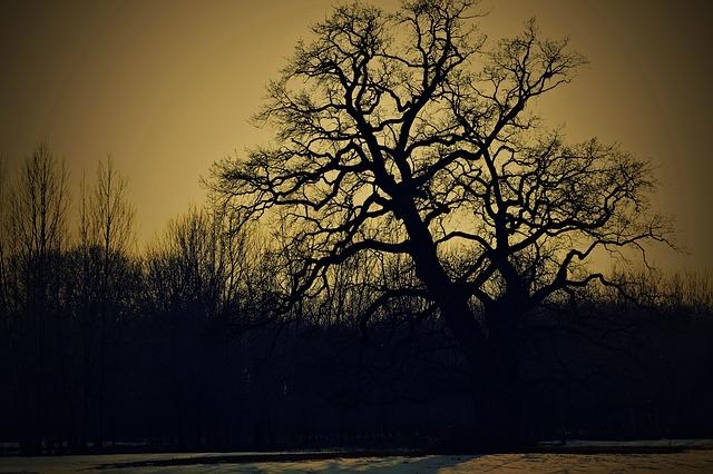 पेड़ का इंतकाम - एलेनोर एफ लेविस की कहानी