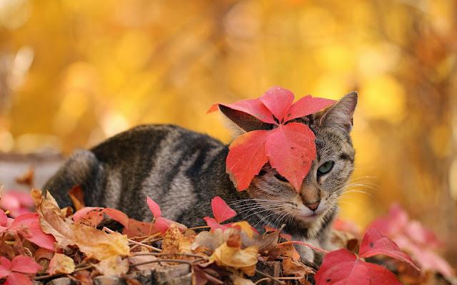 Kat en herfstbladeren