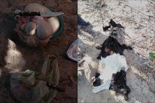 Polícia de Carnaúba dos Dantas descobre quadrilha que vem roubando animais no Seridó