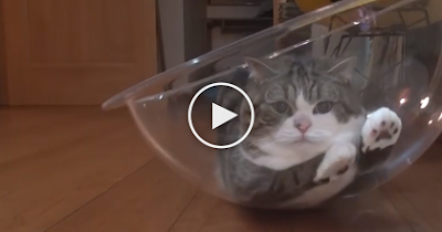 This Cat Finds A New Place To Lay, Now Watch What He Does With It… TOO Cute! - Love Top kitten