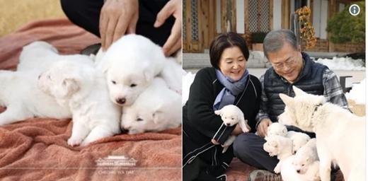Anjing Hadiah Perdamaian dari Kim Jong Un Melahirkan Enam Anak