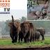 ग्रामीणों पर हाथियों का कहर जारी, फसल सहित किया मकानों को धाराशाही