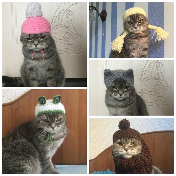 кот позирует в вязаных шапочках