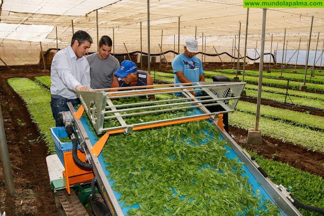 El Gobierno de Canarias suma 54 millones de euros para modernización de explotaciones agrarias con una nueva convocatoria de ayudas