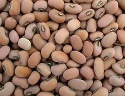 Beans Best for Those with Diabetes