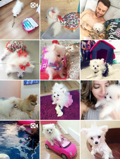 instagram de cachorro