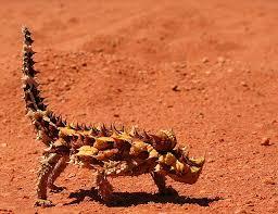 Binatang yang Terlihat Berbahaya Padahal Tidak