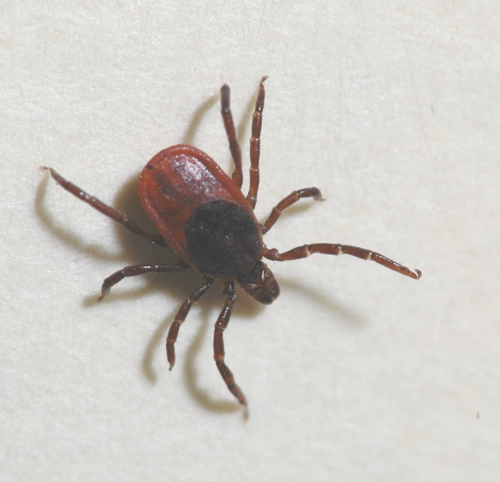 Can Dogs Get Ticks In Winter