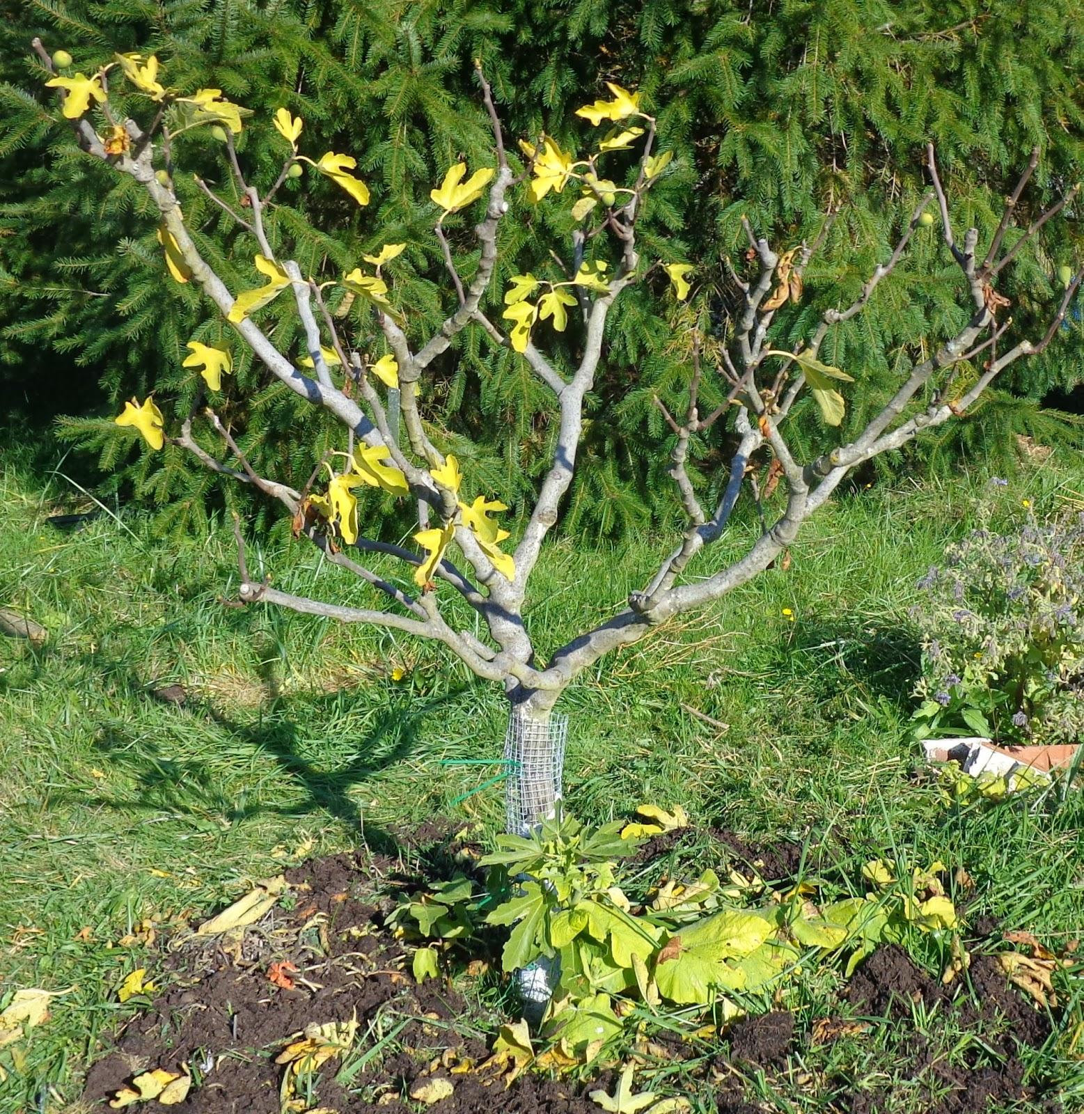 Growing Greener In The Pacific Northwest: October 2013