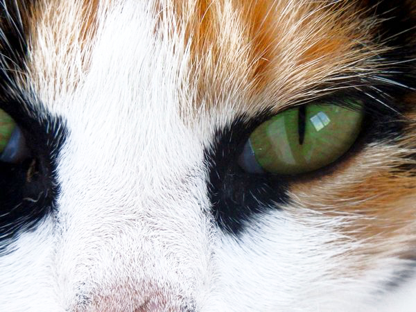 multi-colored cat eyes