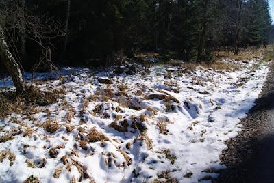 Am Wegesrand liegt Schnee und bedeckt verwelkte Pflanzen