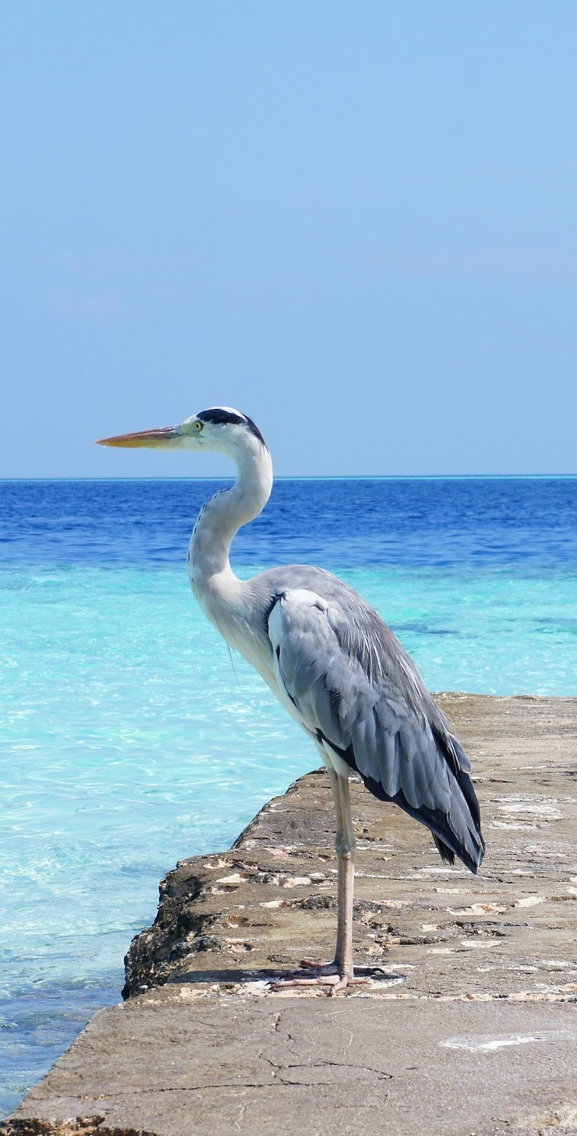 Picture of a stork at the ocean