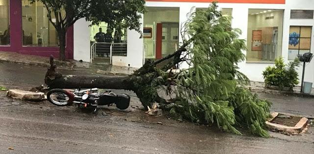Iretama: Árvore cai em cima de motocicleta durante ventania