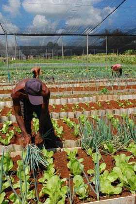 Foto de personas trabajando con plantas - Agricultura