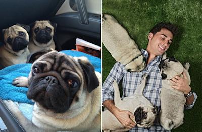 Alvaro Arbeloa's dogs