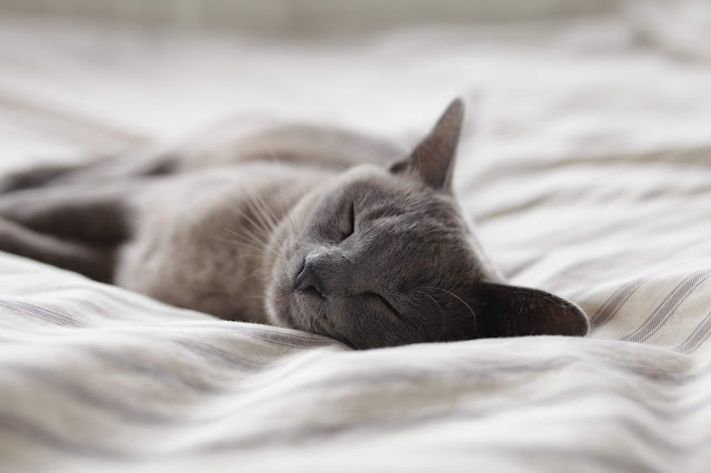 Grey cat asleep on bed