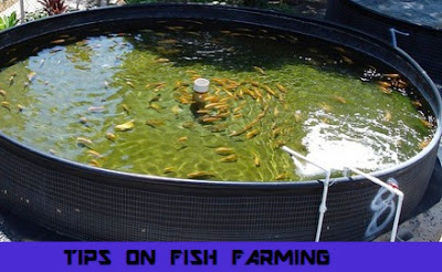 Basic Tips On How to start a fish farm business