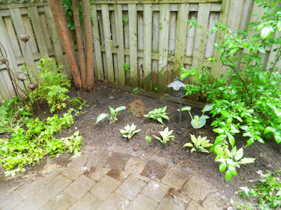Cabbagetown Toronto shade garden with new perennials after Paul Jung Gardening Services