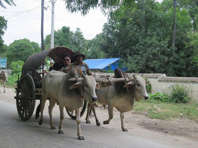 Carretas de bueyes en Mingun