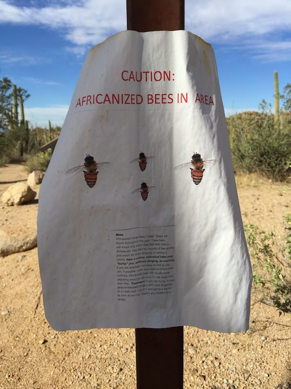 caution african bees