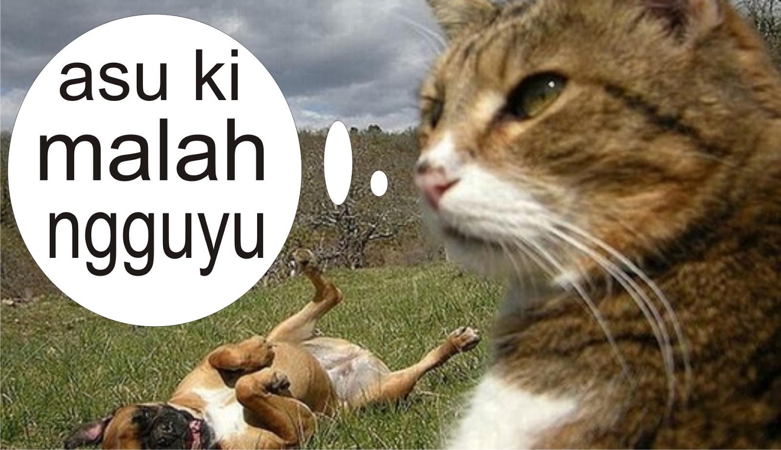 Gambar Hewan Kata Kata Lucu Bahasa Jawa