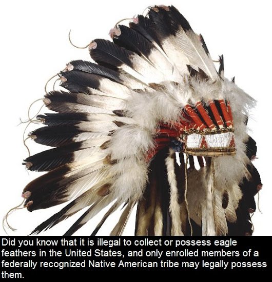Did you know that it is illegal to collect or possess eagle feathers in the United States, and
