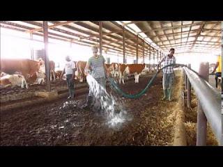 Sebora farms pictures