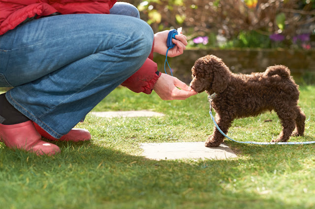 Science shows reward-based dog training is best, like this puppy being clicker-trained in a garden