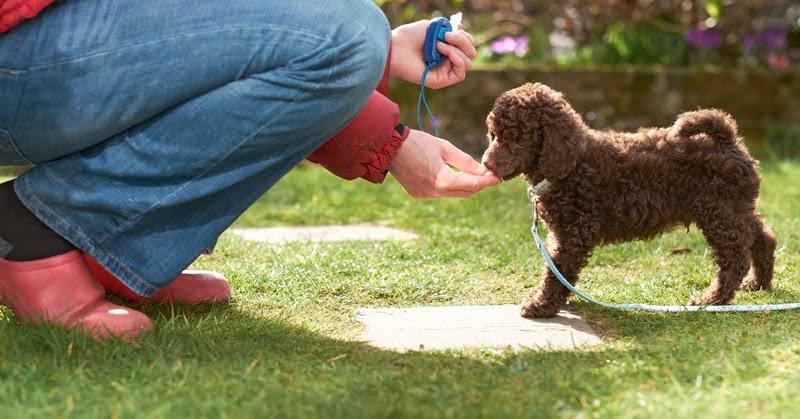 Gal Ziv Dog Training
