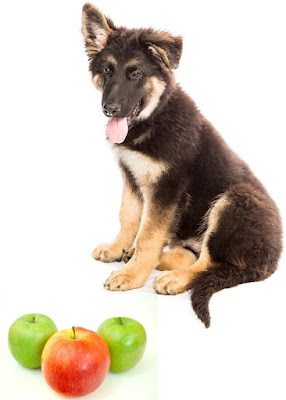 Should Dogs Eat Apples