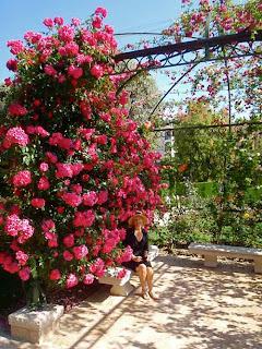 Pat Dunlap Princess Grace's Rose Garden grace