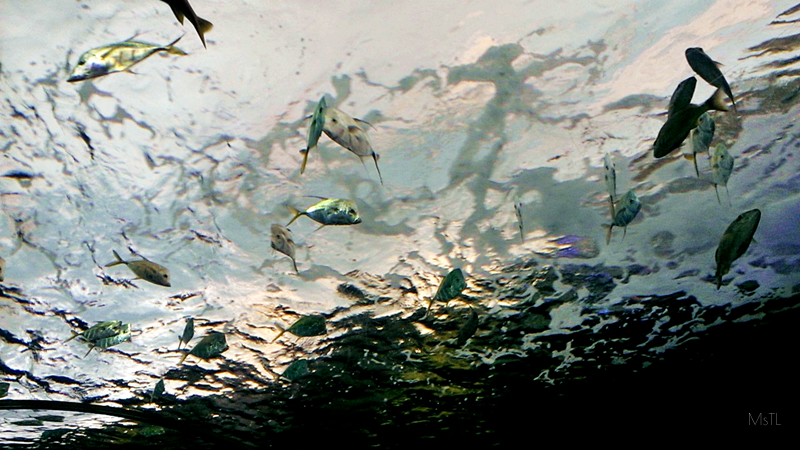 Ripleys-Aquarium-Fish-Surface
