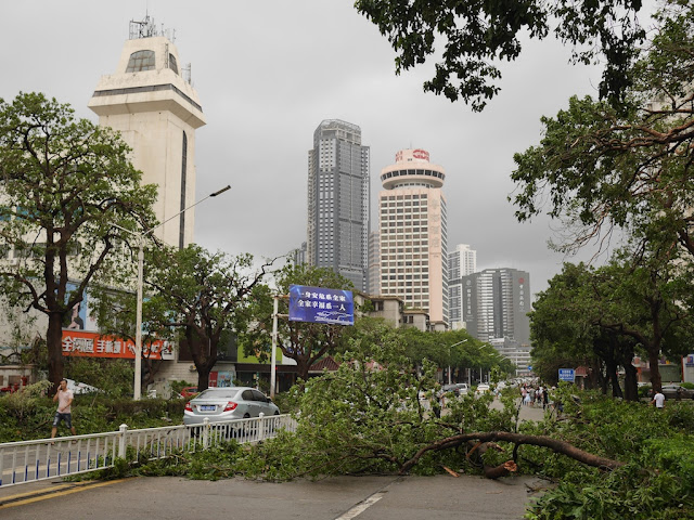 fallen tree on Yuehai East Road in Zhuhai