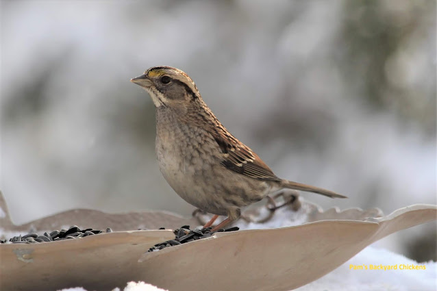 Find out how to get started winter bird feeding - what you'll need to feed the birds and what you'll need to see and identify them.