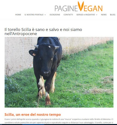 http://www.paginevegan.it/il-torello-scilla-e-sano-e-salvo-e-noi-siamo-nellantropocene/