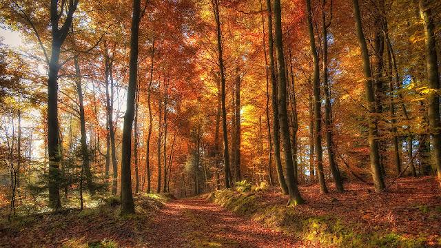 Herfst in het bos met bomen met herfstbladeren