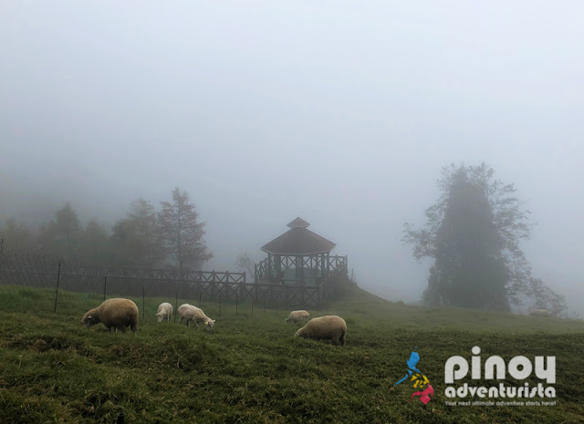 TAIWAN TRAVEL GUIDE 2019 CINGING FARM NANTOU