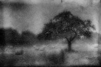 Nebellandschaft mit Baum
