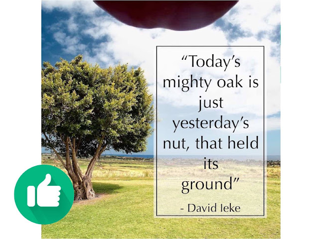 Today's mighty oak is just yesterday's nut that stood its ground