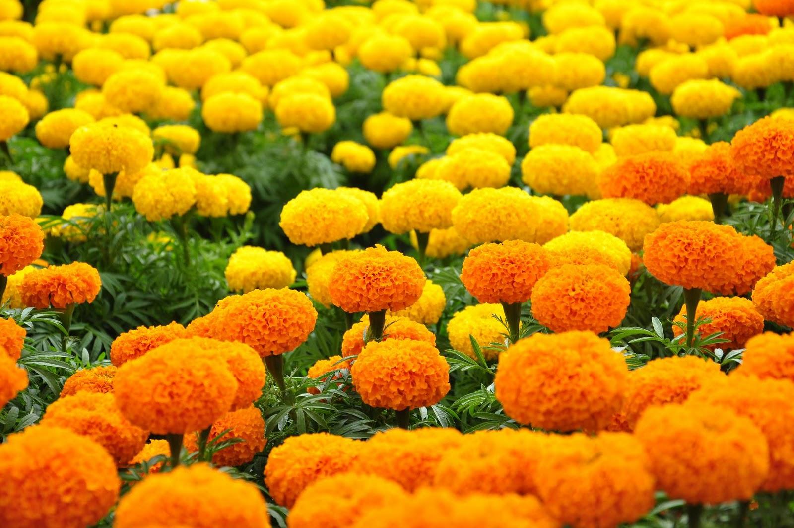 Hoa nào không nên cắm bàn thờ