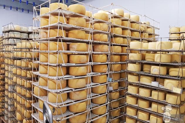 elaboración del queso roncal paso a paso