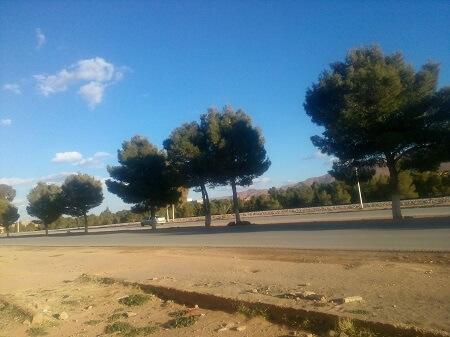 غرس الأشجار على حافة الطرقات
