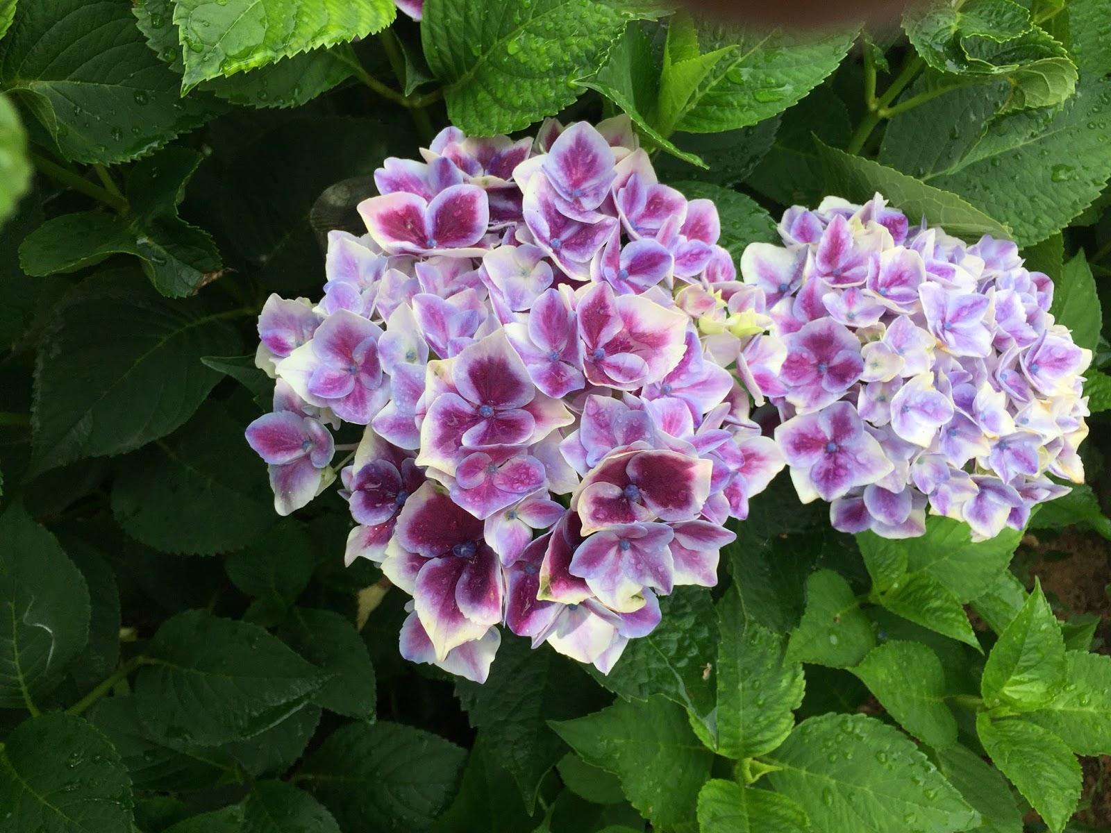 自然素材の家 三重県注文住宅 平屋の家 全館空調の家 リノベーション